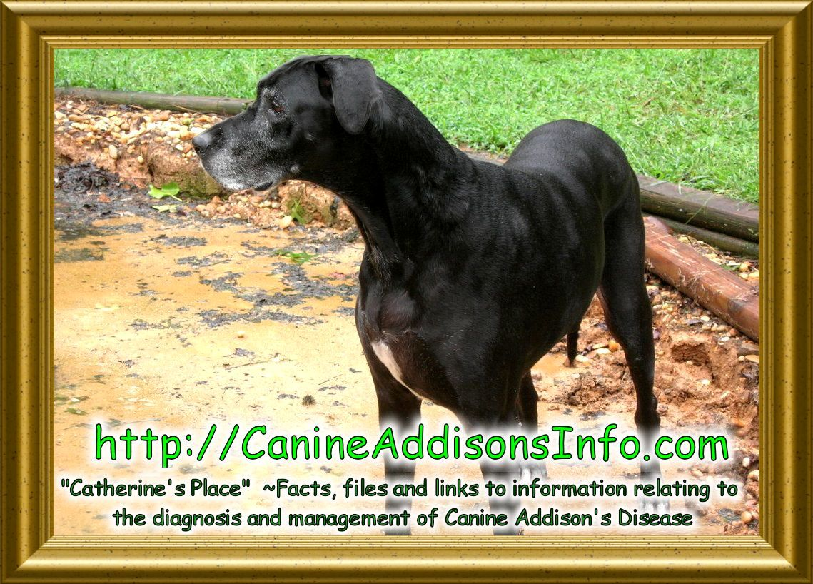 addisons disease  dogs